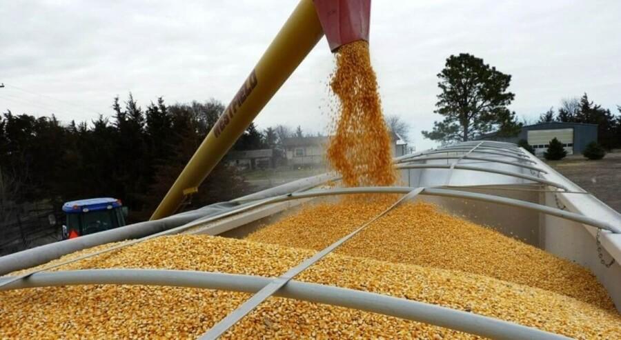 Почему в РК растет импорт сельхозпродукции